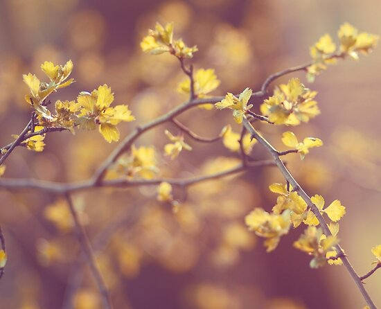 bloom by AnnaGo