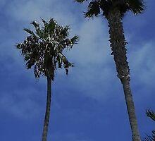 La Jolla Palms by kashmirecho