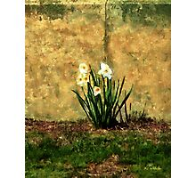 A Spot of Spring Photographic Print