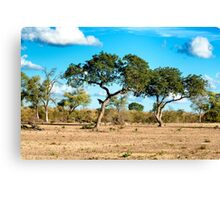 AWESOME SOUTH AFRICA - TREES Canvas Print