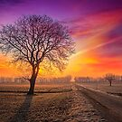 Colour Visions of Fall by Delfino