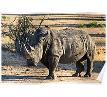 AWESOME SOUTH AFRICA - RHINO Poster