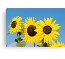 Soaking in the Summer Sun Canvas Print