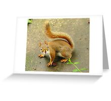 Scene From A Medieval Tapestry ~ With Red Squirrel Greeting Card