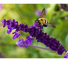 Bee 2 Photographic Print