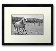 Out for a trot Framed Print