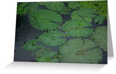 Tropical Raindrops & Water Lilly Pads  by Kerryn Madsen-Pietsch