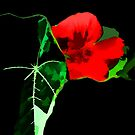 red one by marcwellman2000