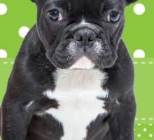 Cute French Bulldog Puppy Green Polka Dots Sticker