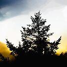 tree 57 by marcwellman2000