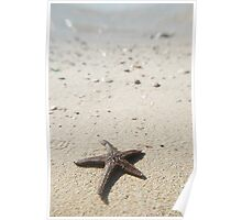 Starfish by the sea Poster