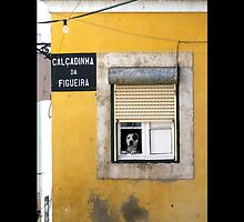 Street Cats and Dogs of Portugal by Menega  Sabidussi
