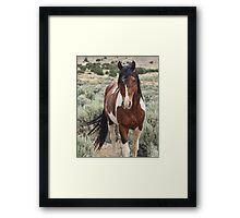 The Stallion Framed Print