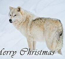 Arctic Wolf Christmas Card - English - 9 by WolvesOnly