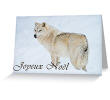 Arctic Wolf Christmas Card - French - 9 Greeting Card
