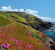Wildflowers at the Lizard, Cornwall by rodsfotos