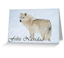 Arctic Wolf Christmas Card - Spanish - 9 Greeting Card