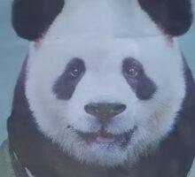 cute panda bear Sticker