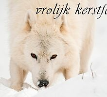 Arctic Wolf Christmas Card - Dutch - 10 by WolvesOnly