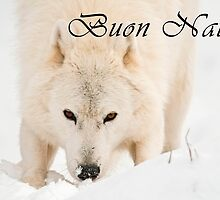 Arctic Wolf Christmas Card - Italian - 10 by WolvesOnly