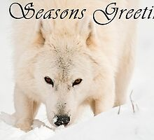 Arctic Wolf Seasons Card - 10 by WolvesOnly
