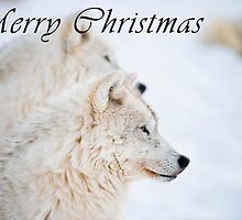 Arctic Wolf Christmas Card - English - 11 by WolvesOnly