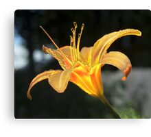 Molten Lilly Canvas Print