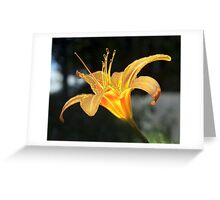 Molten Lilly Greeting Card