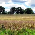 Panorama of English Summer Field by Stephen Frost