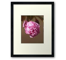 Love in the Sunlight Framed Print