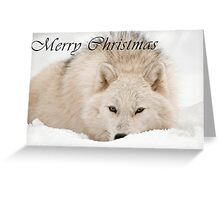 Arctic Wolf Christmas Card - English - 12 Greeting Card