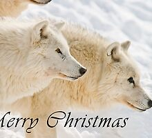 Arctic Wolf Christmas Card - English - 13 by WolvesOnly