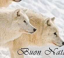 Arctic Wolf Christmas Card - Italian - 13 by WolvesOnly