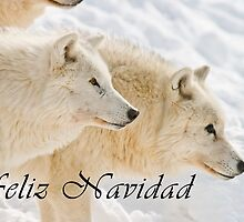 Arctic Wolf Christmas Card - Spanish - 13 by WolvesOnly