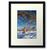Snow Gum Australia Framed Print