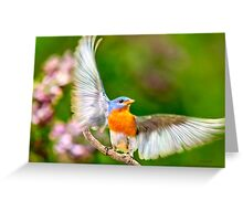 Eastern Bluebird Light as a Feather Greeting Card