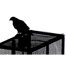 Red Tailed Hawk Silhouette, New York City  Photographic Print
