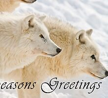 Arctic Wolf Seasons Card - 13 by WolvesOnly
