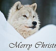 Arctic Wolf Christmas Card - English - 14 by WolvesOnly