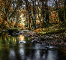 Just Enough Light ~ Whittaker Creek ~ by Charles & Patricia   Harkins ~ Picture Oregon
