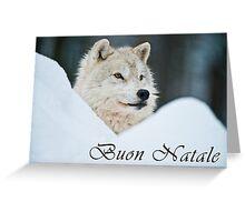 Arctic Wolf Christmas Card - Italian - 14 Greeting Card
