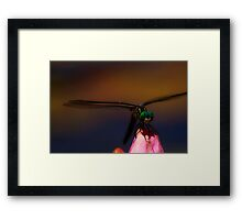 Dragonfly and Waterlily Framed Print