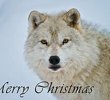 Arctic Wolf Christmas Card - English - 15 by WolvesOnly