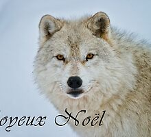 Arctic Wolf Christmas Card - French - 15 by WolvesOnly