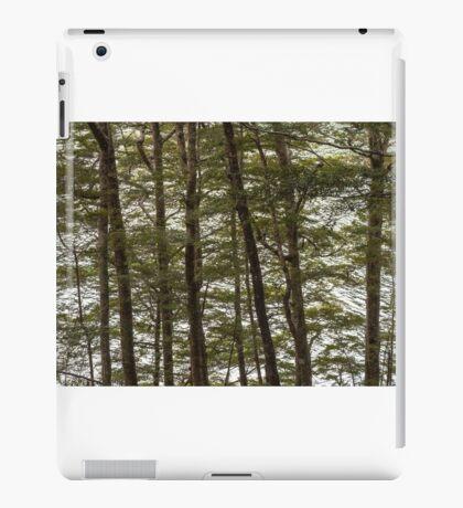 Through the Beech Trees  iPad Case/Skin