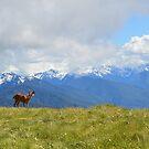 Great View. by Jennifer Bishop