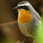 In LOve With A RObin by Graeme M