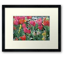 A Patch of Spring Framed Print