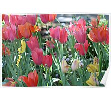A Patch of Spring Poster