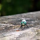 Dragonfly by WeeZie